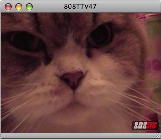 808TTV E.47 – Aloha Cats