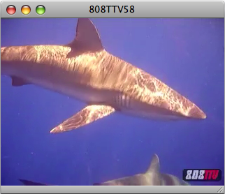 808TTV E.58 – Hawaii Shark Adventure