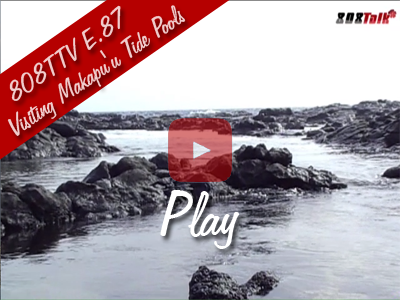 808TTV E.87 - Visiting Makapu'u Tide Pools
