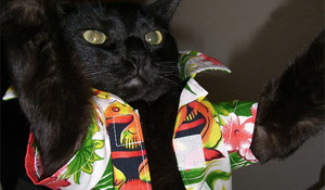 Hawaii Cats Show Off Their Halloween Spirit