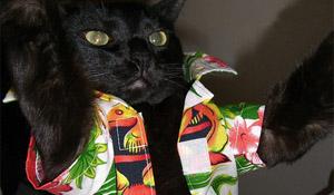 Hawaii Cats Show Off Their Halloween Spirit