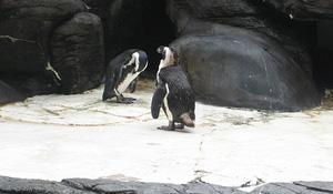 Penguin Colony (Flickr ©victoria.wiseman)