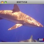 808TTV E.58 &#8211; Hawaii Shark Adventure